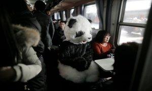 Panda-on-train