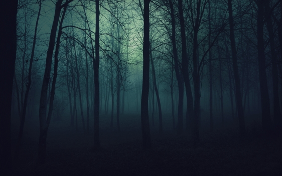 wood_trees_gloomy_fog_haze_darkness_50175_2560x1600.jpg